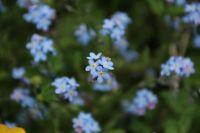 BlumenPfingsten2015_033