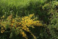 BlumenPfingsten2015_039